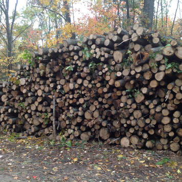 A stack of pulwood from a timber harvest in montmorency county, Michigan